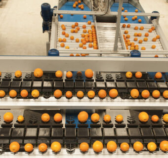 Understanding the Bottlenecks and Opportunities in Value-Added Exports of Fruits and Vegetables
